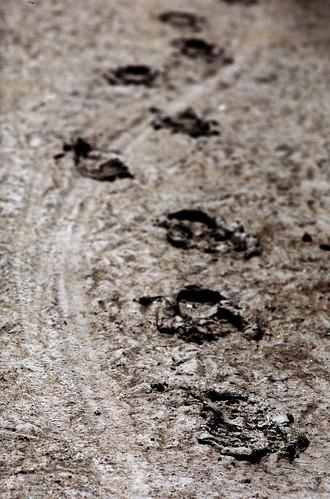 Tracks (Astia:001:34)