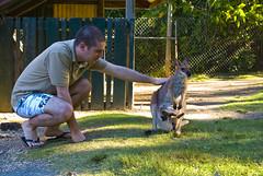 Coffs Harbour (38 of 45) (Dinaiz) Tags: park harbour koala coffs