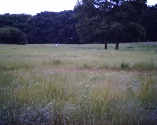 【写真】VQ1005で撮影した武蔵野公園の原っぱ