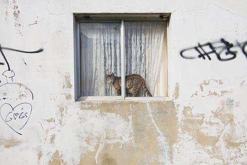 A cat in a window