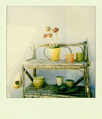 roids on a sunday (Lynn_L) Tags: polaroid backyard stuff andlotsofit artlibre focuslegacy twigshelf