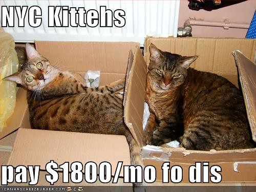 funny-pictures-new-york-cats-hate-their-apartments