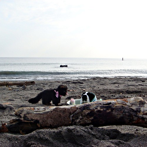 Japanese sunken baths are best shared on the beach with friends! (by martian cat)