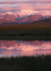 Alpine Glow (Wolfhorn) Tags: nature alaska glow shot many alpine to wilderness tundra mosquitoes anawesome keevypeak