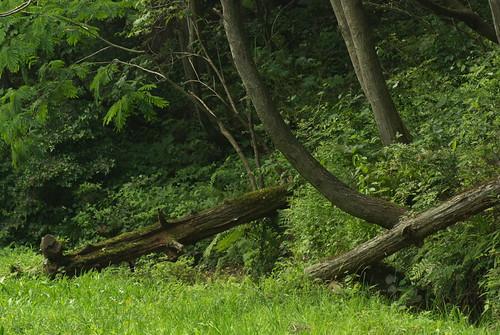 20080705048風倒木