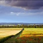 South Wonston Poppies