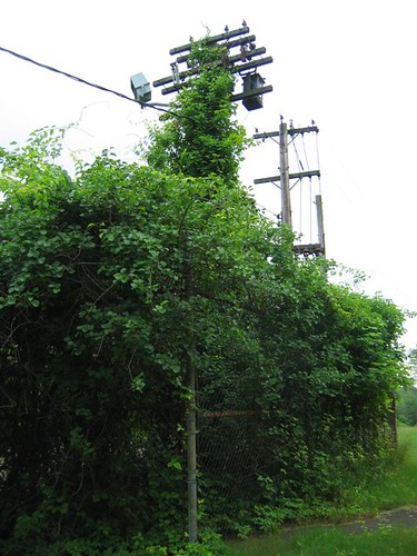 Overgrown utility cage