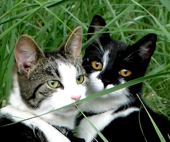katter, porträtt, gräs, grönt, nära, vänskap, släktskap
