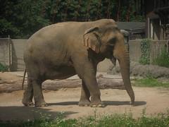 Zoo de Karlsruhe Germany (HSSand) Tags: nature animals landscape zoo monkeys moutain environnement stadtgarten bundesgartenschau recreationalarea karlsruhezoo bundeslandbadenwrttemberg nearthefrenchgermanborder federalgardenshow
