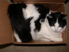 Punky (LineBean) Tags: horses cat tbone catnipaddicts