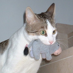 CAT AND DONKEY (vic_206) Tags: topv111 cat wow wonderful toys cool nice funny chat lol gato kitties p