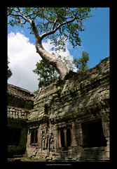 Ta Prohm Temple, Cambodia  404