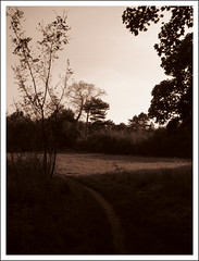 Yarnton, Oxfordshire (Martin Beek) Tags: monochrome sepia landscape photography historic oxfordshire atmospheric tonal monochromephotography yarnton sepialovers atmosphericlandscape monochromelandscape sepiaandmonochrome monochromeandsepia monochromelandscapes martinbeekc landscapeswithatmosphere