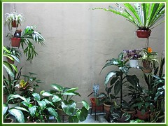 A more central view of our courtyard garden