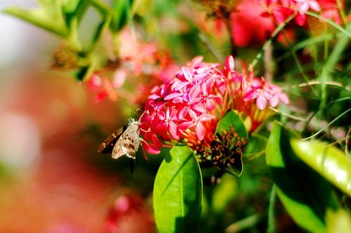 The Nectar Gatherer
