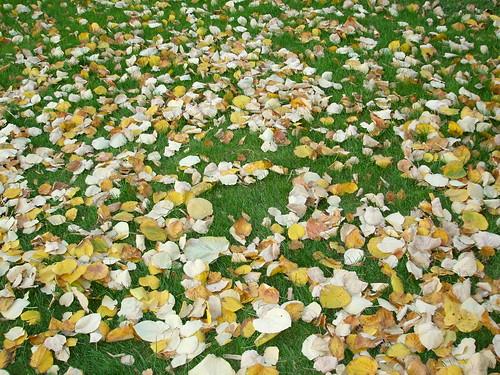 Frunze pe iarba