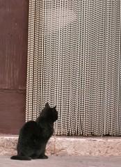 Attesa (alfiererosso) Tags: animals cat chat gato katze gatto animali tier