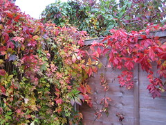 Autumn in east London, Oct. '08