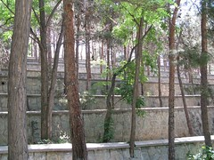 Tree's Lines (bahareh220) Tags: tree green spring branch iran steps silence tehran    bahareh     mellatpark digitalcameraclub  raziani