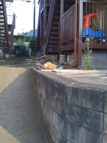 猫がひなたぼっこ
