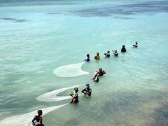 African women fishing in the shallow water (mattk1979) Tags: africa blue sun seaweed tanzania fishing women african turquoise indianocean zanzibar nets nungwi