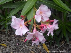 Cool pink flowers2