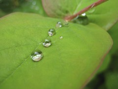 drops on a leaf (Kamiel Blom) Tags: amsterdam blom kamiel