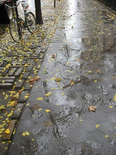 November Rainstorm