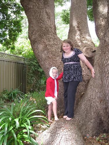 Bottom of the tree