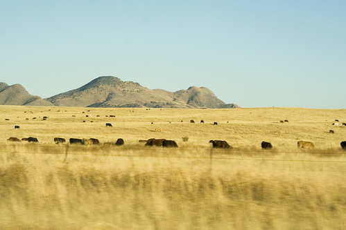 pastures in elgin, arizona