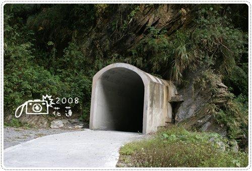 白楊步道 (1)