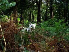 Meiga (puentef) Tags: campo ourense e510