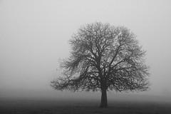 Looking Into The Fog (geeo123) Tags: xmas white black blur cold tree fog day bassett dunton
