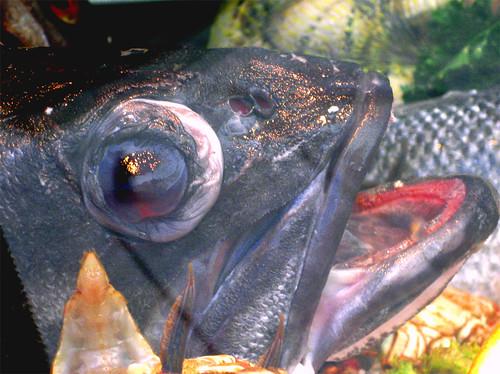 La boca del pez