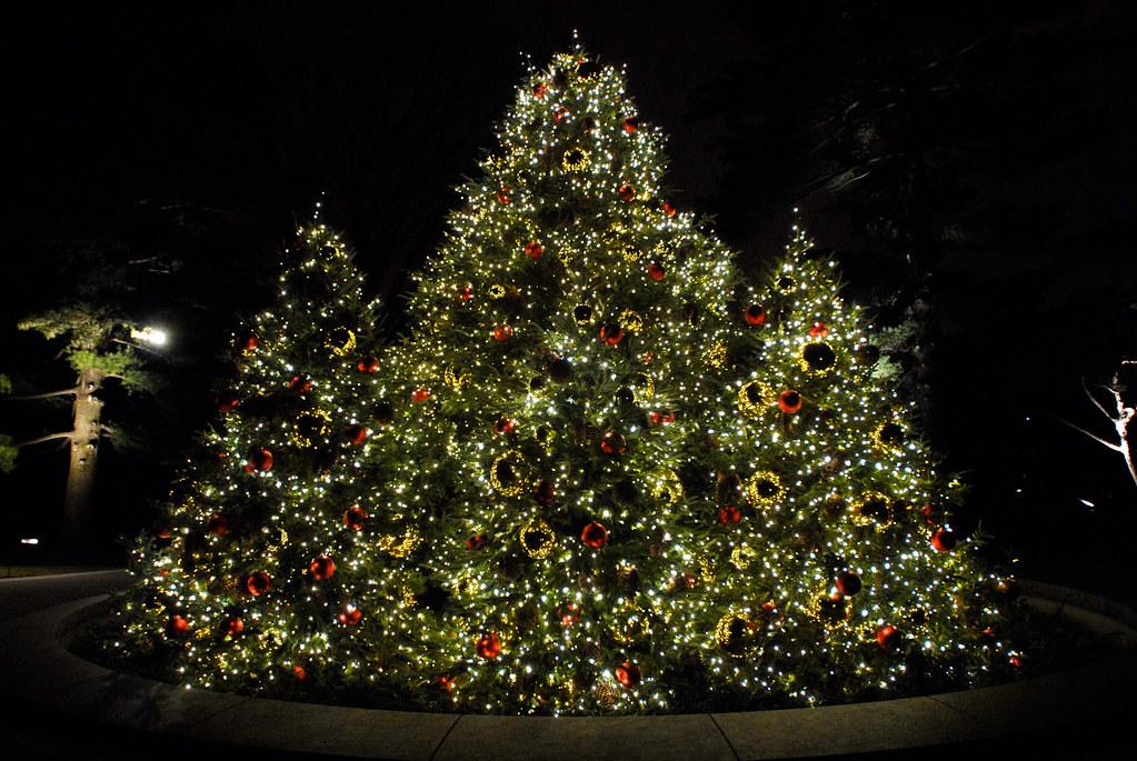 Holiday Evergreens