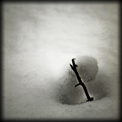 Wintertide #31 (spark) (Lumase) Tags: white snow love square hurt branch heart explore vision spike amos spark soe ofcourse whiteness explored selfprotection mywinners lumase wintertide luigimasella notabwpic
