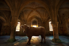Abbaye de Fontenay - Bestial (Aur from Paris) Tags: france church photoshop cow peace pray tranquility silence photomontage bourgogne bestial ctedor aur abbayedefontenay 5dmarkii eos5dmkii