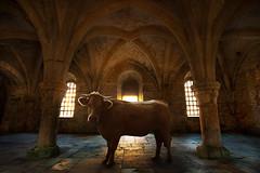 Abbaye de Fontenay - Bestial (Auré from Paris) Tags: france church photoshop cow peace pray tranquility silence photomontage bourgogne bestial côtedor auré abbayedefontenay 5dmarkii eos5dmkii