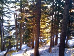 Glowing trees below the summit ridge
