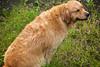 IMG_2892-23 (藍迪 I'm) Tags: taiwan 南投 250 200mm 黃金獵犬 shutterpriority 水里 0ev 1320secatf45