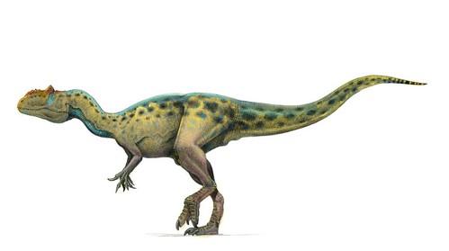 saurophaganax color