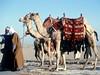 Egypt Sahara Beduins
