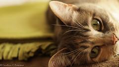 Stare. (ce.rosero395) Tags: lighting cats blur green animals digital cat photography eyes indoor olympus winner stare mycat challenge beginner indoorphotography epl1 olympusepl1