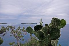 distanze... (Lollo [neon]) Tags: sardegna panorama nikon italia nuvole mare villasimius h2o cielo spine acqua paesaggio fico coste naturalmente distanze profondità d80 allphotoswanted nikonclubit trasognierealtà