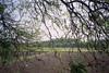 through the branches (Jennifer Kumar) Tags: farmers negativescan tamilnadu pondicherry india1998 puducherry