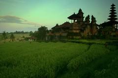 Pura Desa Lan Puseh (Farl) Tags: travel bali colors indonesia temple rice farming terraces culture agriculture ricefields pura development sawah desa tabanan pakraman berembeng puradesalanpuseh