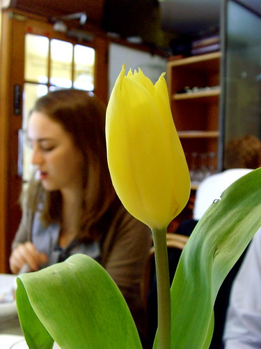 Embo & Tulip
