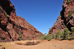 Coppins Gap (The Grateful Dad) Tags: fish cormorants westernaustralia pilbara waterholes marblebar bamboocreek coppinsgap