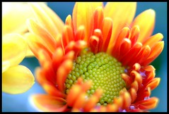True colors #2 (Willem van Velzen) Tags: flowers macro colors closeup explore recent bloemen fujis5pro colourartaward willemvanvelzen