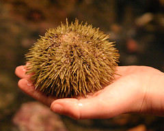 Discovery in the Palm of a Child's Hand (BigSkyKatie) Tags: sea boston aquarium child hand massachusetts touch experience learning urchin discovery touching newenglandaquarium handson enrichment echinoidea katielasallelowery
